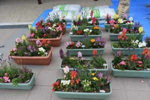 [お知らせ]唐古.鍵史跡公園展示館前で「花壇の植え替え体験」を実施。
